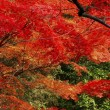 autumn-leaves_beiz.jp_L07128